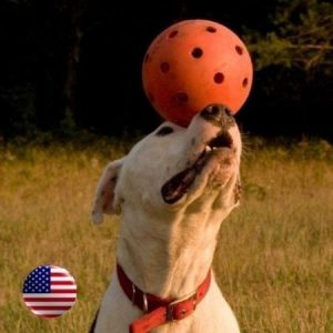 "6"" High-Density Polyethylene Plastic Unbreakoball Dog Toy (Orange) - 858021003001 - Balls"
