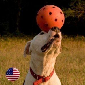 """6"""" High-Density Polyethylene Plastic Unbreakoball Dog Toy (Orange) - 858021003001 - Balls"""