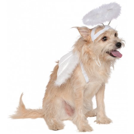 Angel Wings and Halo Pet Pet Costume - Medium/Large