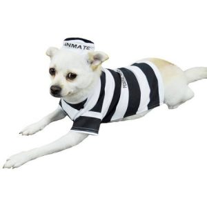 Otis and Claude Fetching Fashion Prison Pooch Costume, S