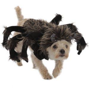 Princess Paradise Premium Tarantula Dog Costume