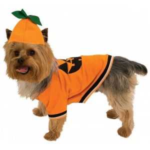 Pumpkin Pet Pet Costume - Large