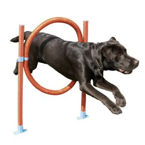Rosewood Pet Agility Hoop Jump Dog Training Toy