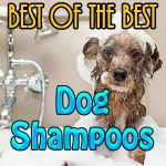 Dog Shampoos Best of Best