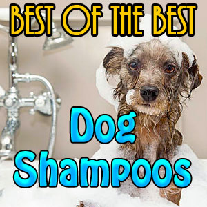 Dog Shampoo Reviews – Best of the Best