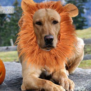 Docamor Lion Mane for Dog Halloween Dog Costume