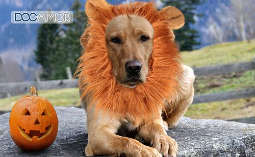 Docamor Lion Mane for Dog Halloween Dog Costume