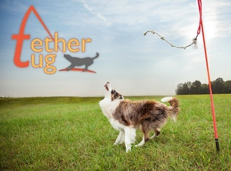 Interactive Tether Tug Dog Toy